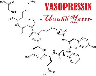 humans cheat vasopressin