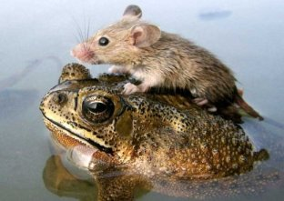 Unlikely-Animal-Friendships-48