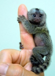 animal-animals-baby-big-cute-finger-Favim.com-39347_large