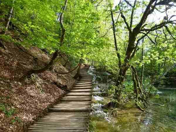 森の中も歩いていきます:プリトヴィツェ国立公園