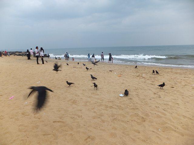 ビーチ一面にカラスが、ネゴンボビーチ:スリランカ