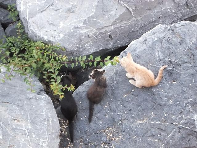 イスタンブールの子猫たち