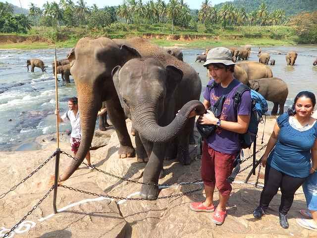 いたずらしてくる象:ピンナワラの象の孤児院
