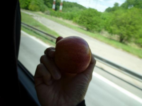 ハンガリーの友達にもらったリンゴをかじりながら…