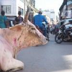 ホーリー祭りで色を付けられた牛:バラナシ
