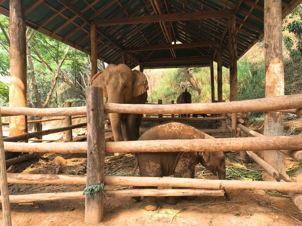 赤ちゃん象・チェンマイ旅行
