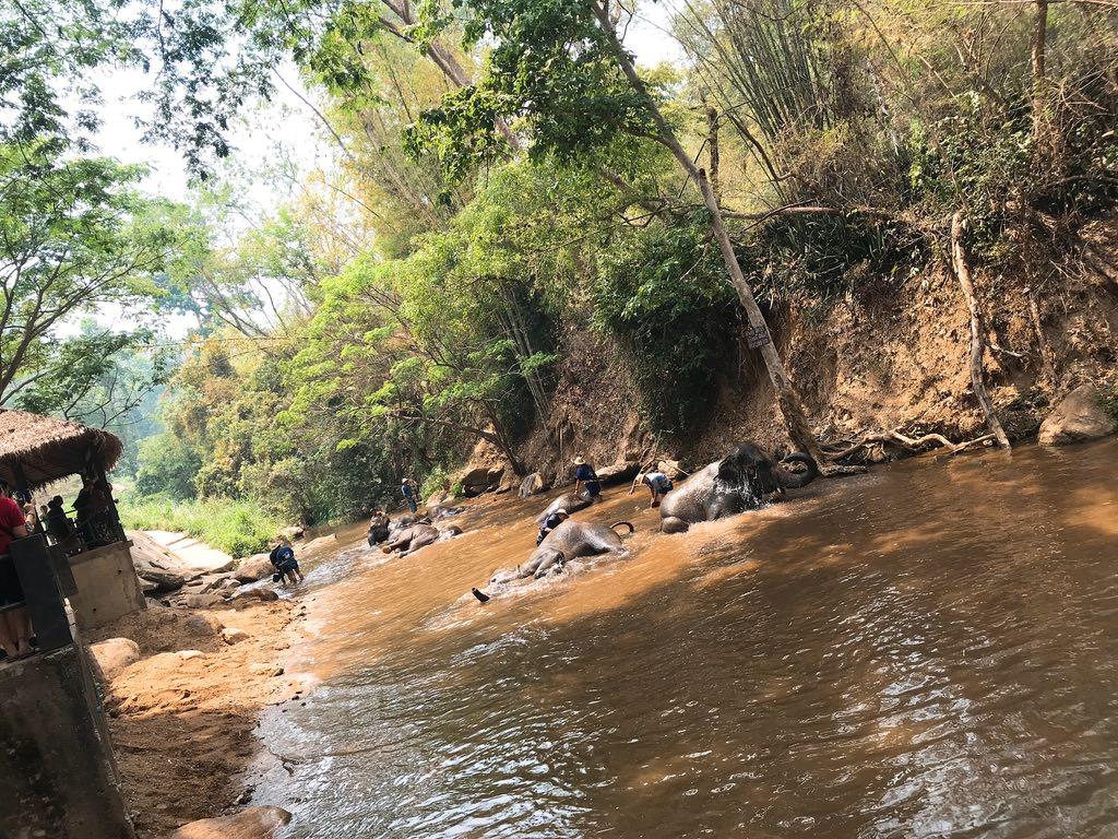 象の水浴び・メーサーエレファントキャンプ