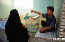 Chłopiec sprzedający karteczki z wersetami Koranu. Kartki dziobem wybiera papuga. Kashan Iran trzask.pl
