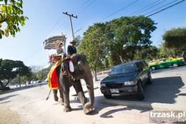 Elephant taxi, Ajuthaya