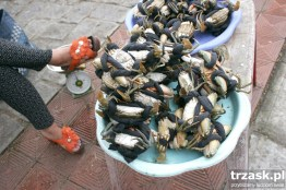 And today for breakfast?...Crabs, Vietnam