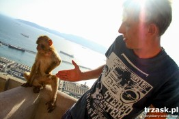 We are trying to be friends with the Barbary Macaques in Gibralta. You can't feed can them, and without nuts it's not easy