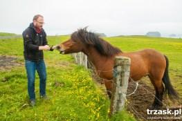 Konie (nie kuce) islandzkie – bardzo łagodne