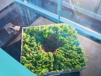 Green Roof Wind Tunnel Testing