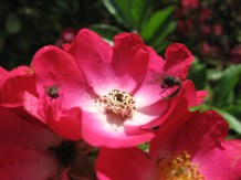 Virágok 2.