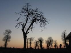 esti fák