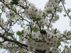 s kinyílok mohón, mint tavaszi ág,