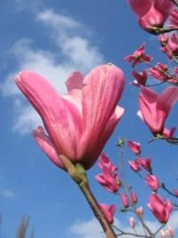 Itt a tavasz!!!!!!!!!!!!!!!!!!!!!!!!!!!!