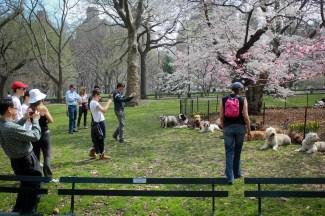 New Yorkban mindenféle furcsaságokba futhatunk / Il y a des chose bizarre dans New York :)