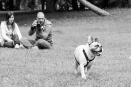 bulldog piknik-0792