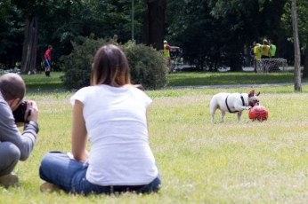 bulldog piknik-0844