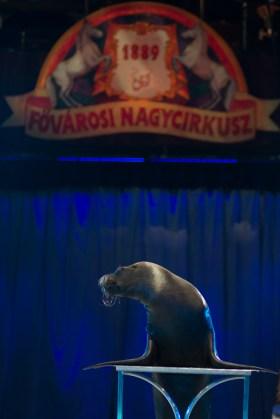 cirkusz-4325