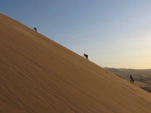 Balade dans les dunes