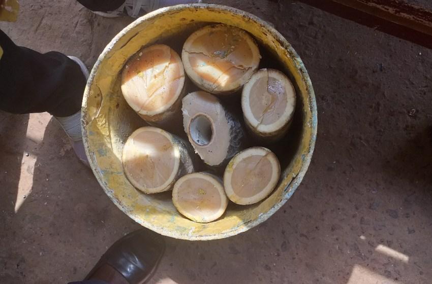 Haut-Ogooué/Un autre enseignant et son complice arrêtés pour trafic d'ivoire