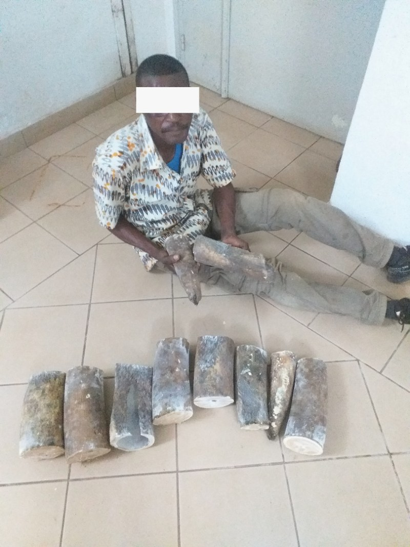 Un autre enseignant et son complice arrêtés pour trafic d'ivoire