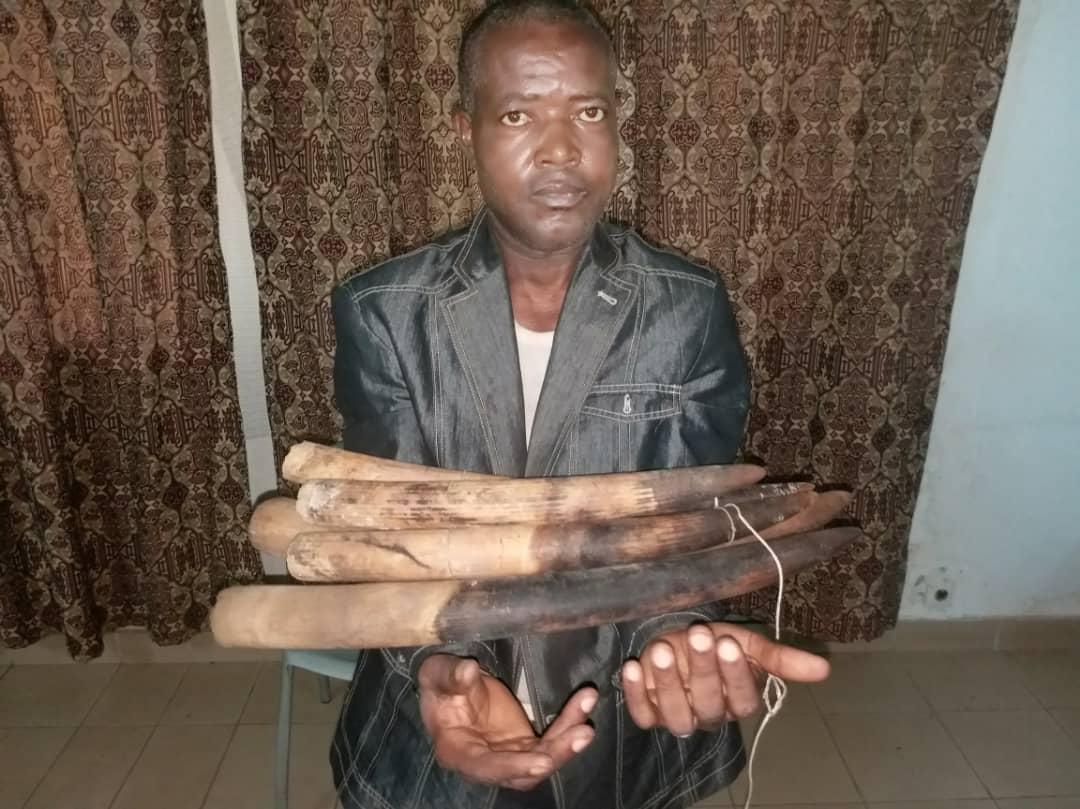 Un trafiquant d'ivoire arrêté à Moanda