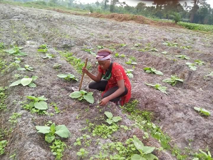 Village agricole Graine de Bolokoboué: un incubateur à ciel ouvert pour une économie traditionnelle assurée