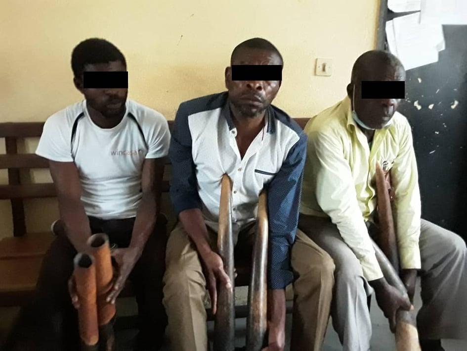 Bernard MOKOKO, Jean BONGOMBE et Apollinaire ANGOUE en possession des six pointes d'ivoire