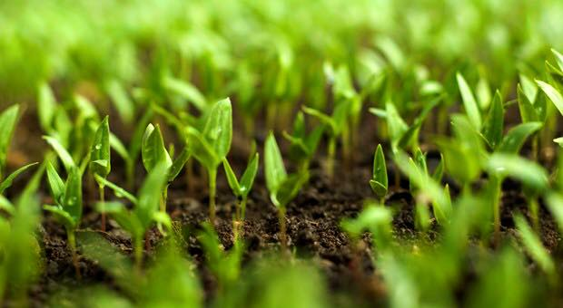 Gabon: Valoriser le potentiel agricole, une garantie pour la sécurité alimentaire.
