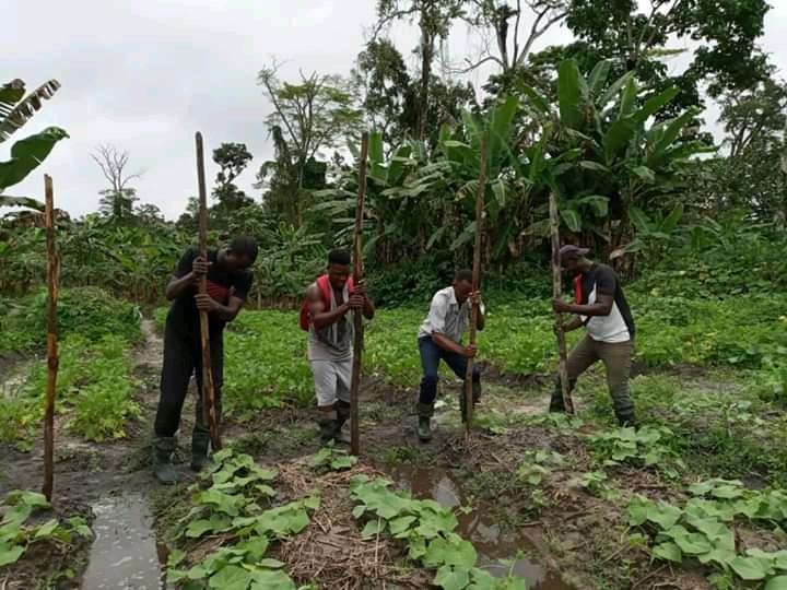 Des jeunes en formation au Village Graine de Bolokoboué