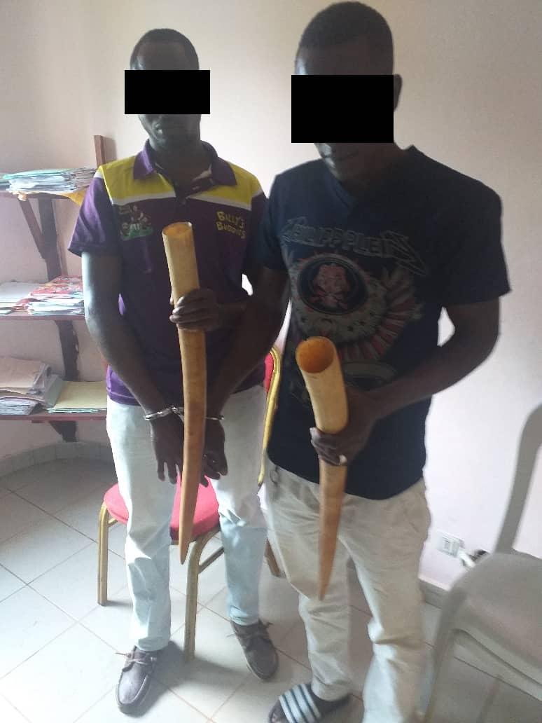 Ibrahim Dialo et Karim Bengali en possession d'ivoire