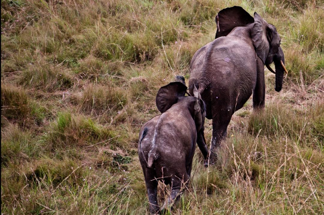 Une vue des éléphants, espèce à protéger