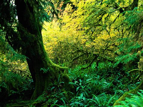 tropical rainforest climate graph biological science picture directory