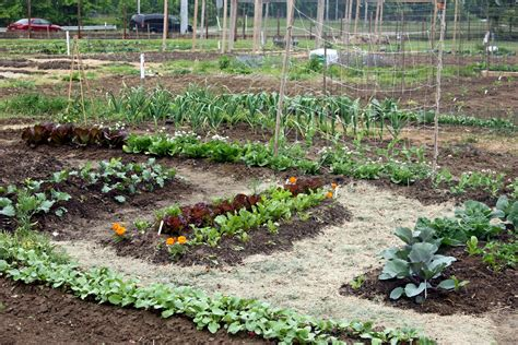 fafard vegetable garden soil preparation