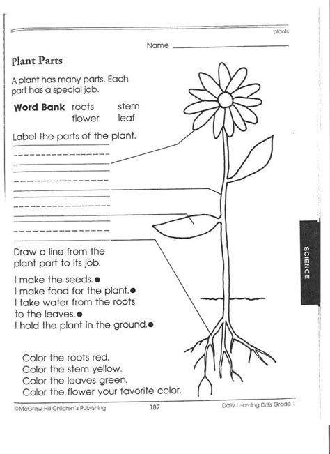 1st grade science worksheets picking plants people william