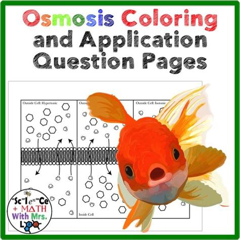 cell transport osmosis coloring page poster application question