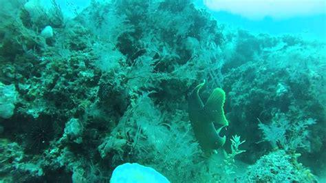 diving st andrew jetty panama city beach fl