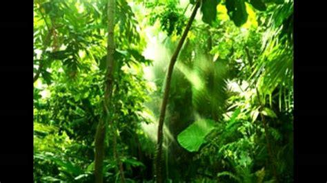 rainforest biome tropical rainforest plants youtube