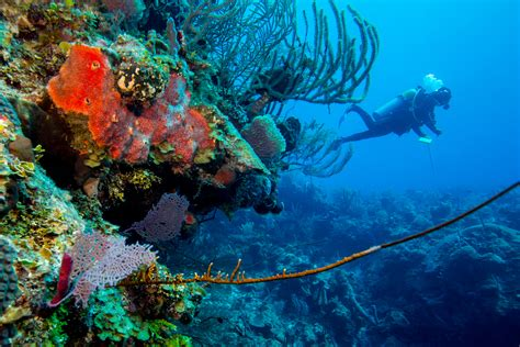 turneffe atoll belize central america scuba diving packages