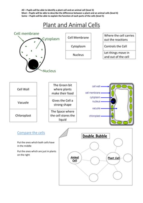plant animal cells mullany teaching resources tes