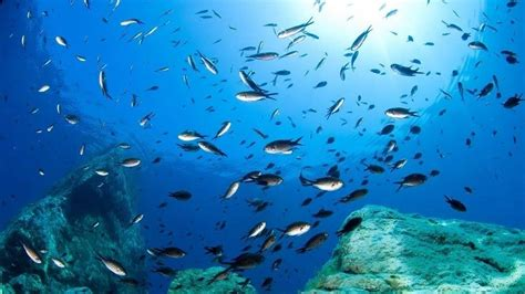 diving europe guide european dive sites updated 2019