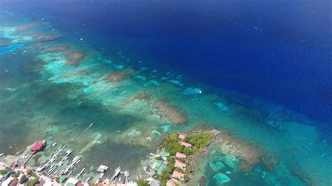 dive sites roatan offered daily coconut tree divers