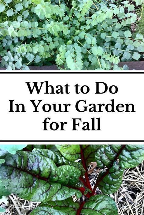 prepare garden fall images fall garden vegetables vegetable