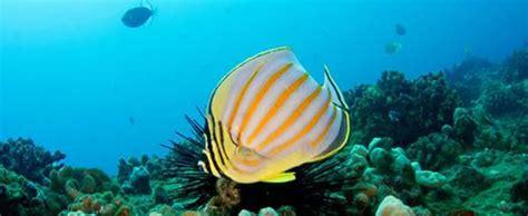 kauai scuba diving tours hawaii discount