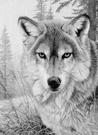 printable free wolf coloring pages adults desenhos
