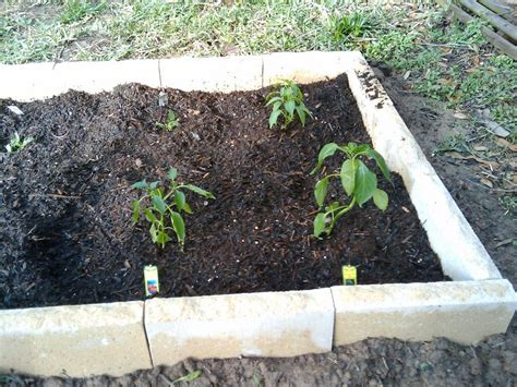 Soil Growing Vegetables Soil Preparation