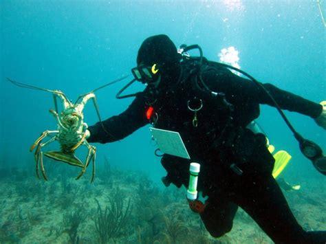diving miami usa private scuba lessons